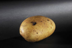 Potatoes Black spot