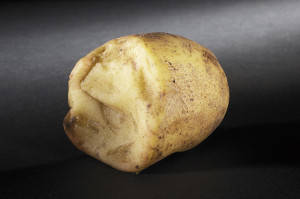 Potatoes Fresh damage